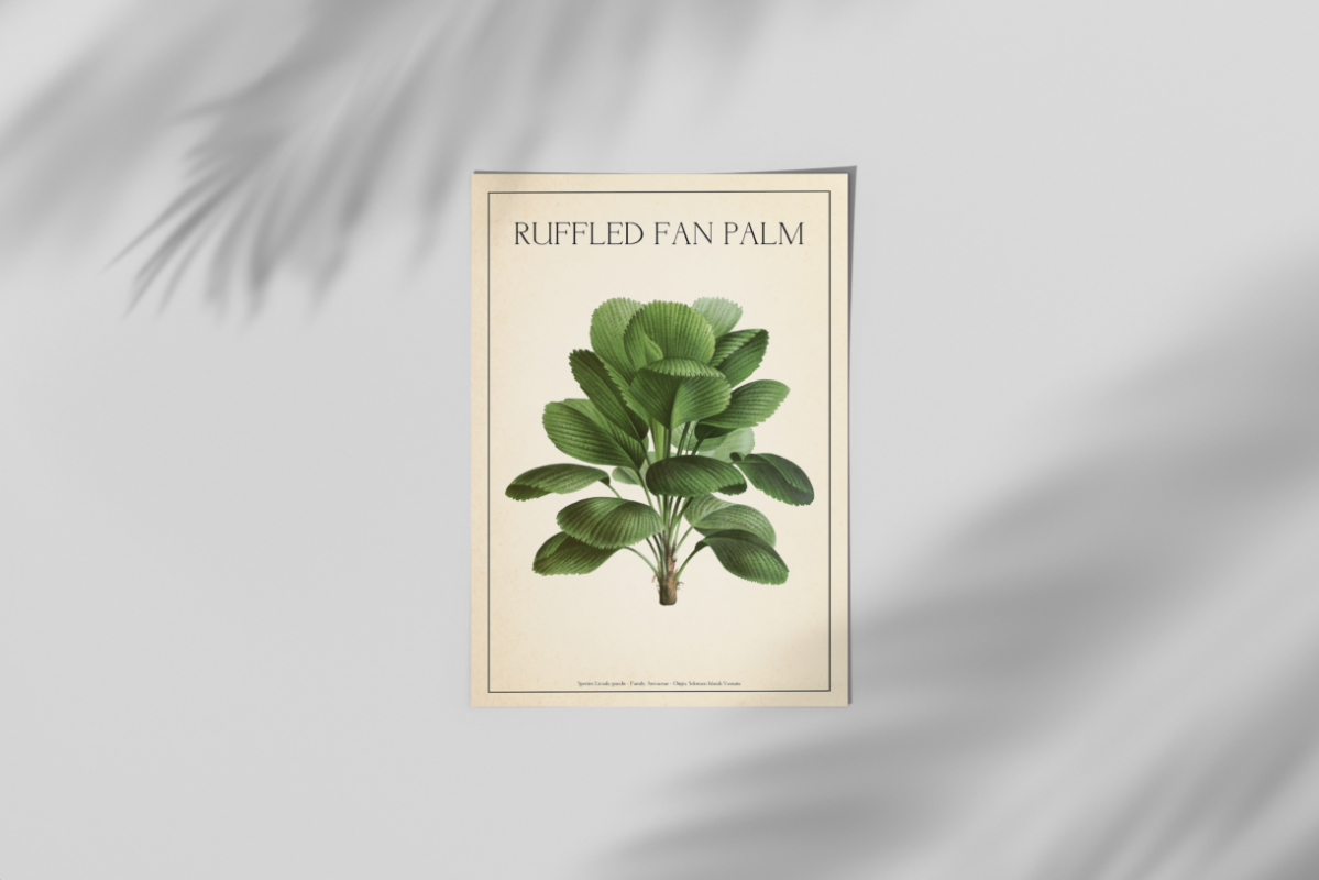 mockup_ruffeled-fan-palm